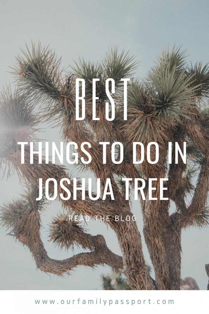 "Photo of a close up Joshua Tree with text on the front that says, ""best things to do in Joshua Tree. Read the blog. www.ourfamilypassport.com"""