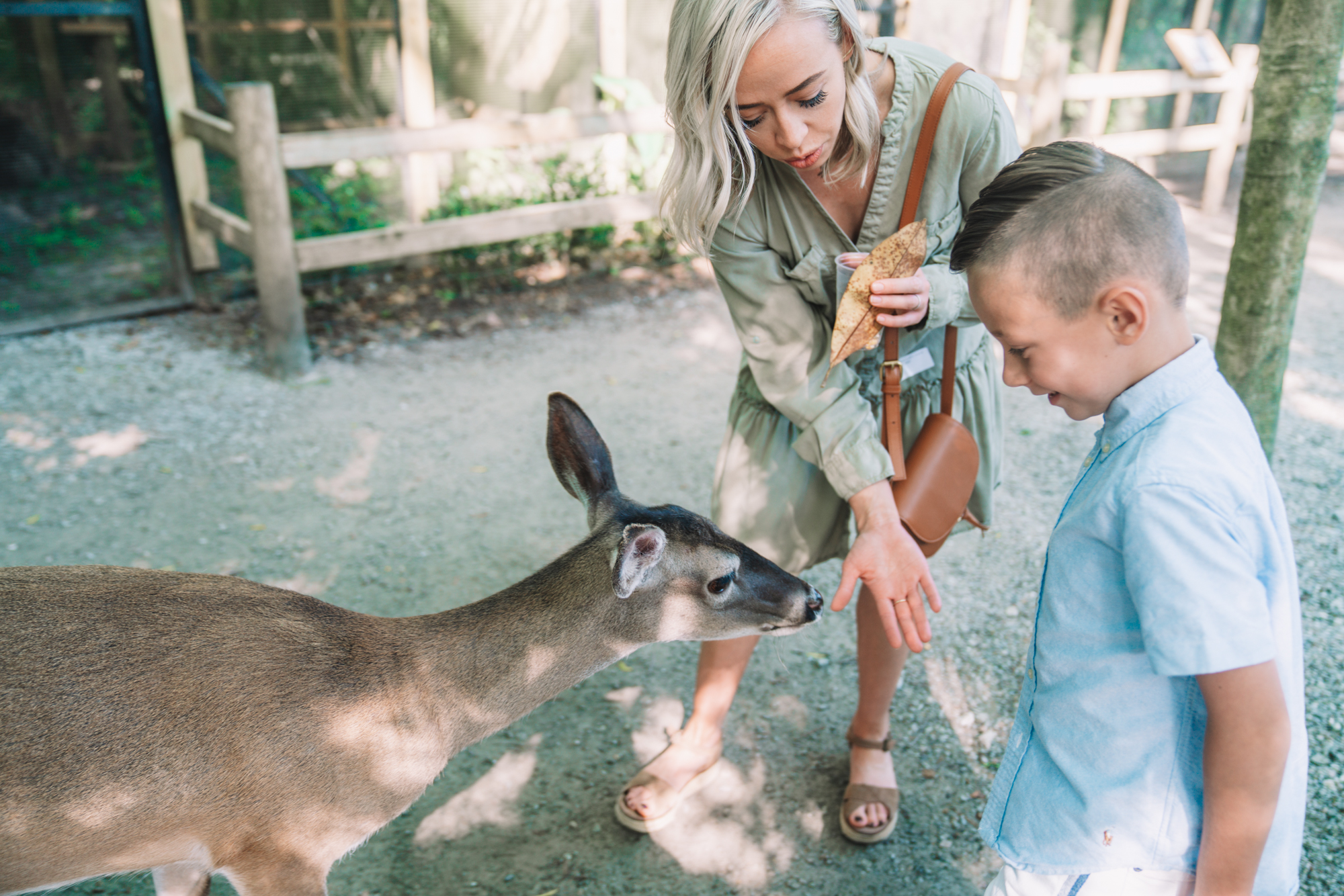 Things to do in Charleston sc with kids - a young boy and his mom feed a deer.
