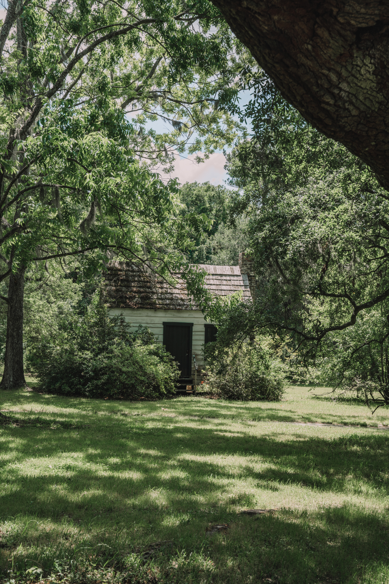 Things to do in Charleston sc with kids - a white slave cabin can be seems behind the vegetation of a big tree.